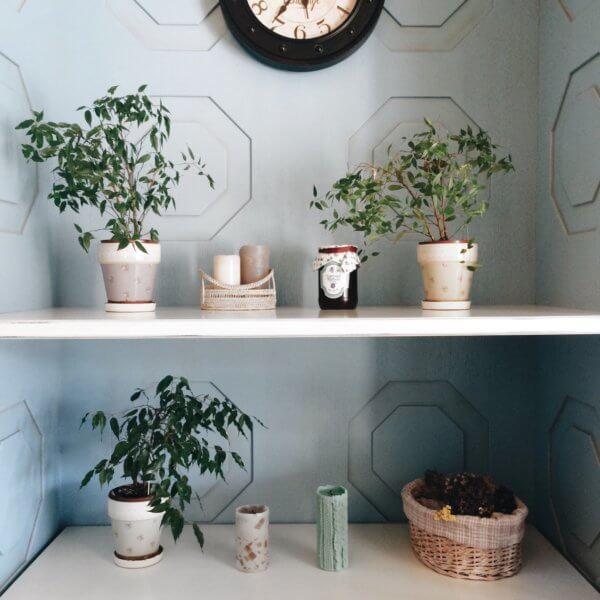 decorating house with small plants